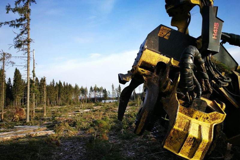 Forest Linna